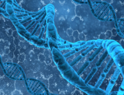 dna-double-helix-mthfr-gene-folate-folic-acid